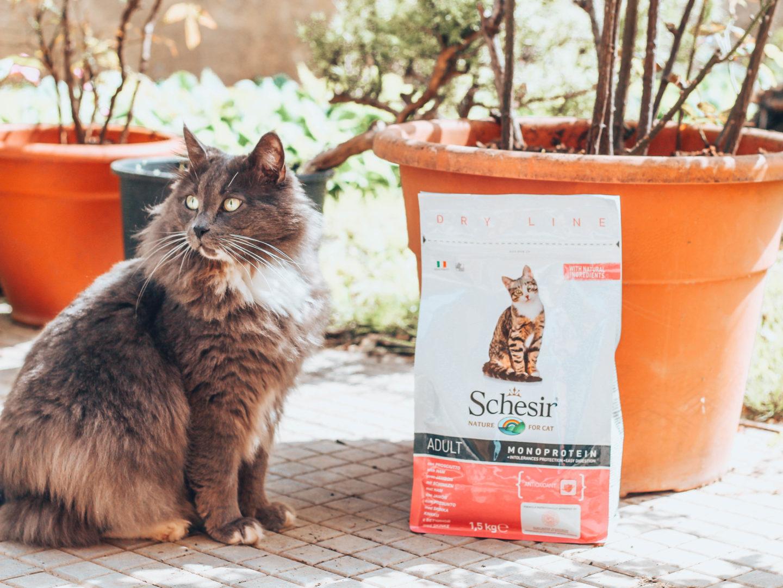 Schesir: l'alimentazione giusta per i miei gatti
